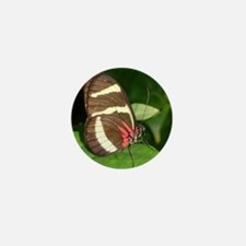Butterfly pic Mini Button