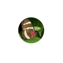 Butterfly pic Mini Button (10 pack)