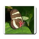 Butterfly pic Mousepad