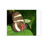 Butterfly pic Postcards (Package of 8)
