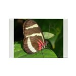 Butterfly pic Rectangle Magnet (100 pack)