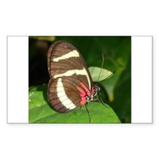 Butterfly pic Rectangle Decal