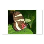 Butterfly pic Rectangle Sticker