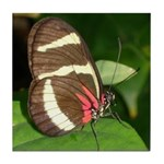 Butterfly pic Tile Coaster