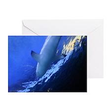Shark! Greeting Cards (Pk of 10)