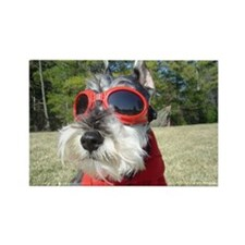 Cool Schnauzer Rectangle Magnet