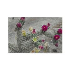 Desert Flower Rectangle Magnet