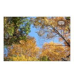 Chesapeake Arboretum 11 05 Postcards (Package o