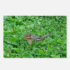 chipmunk 3 Postcards (Package of 8)