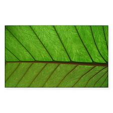 Green Leaf Decal