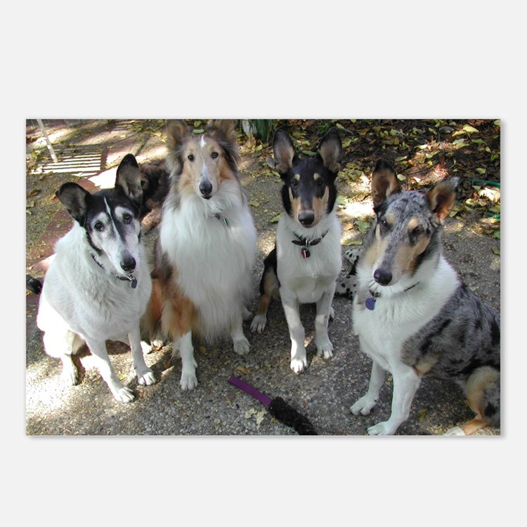 Collie Pack Postcards (Package of 8)
