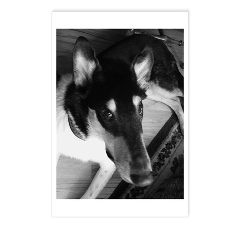 Rocky Postcards (Package of 8)