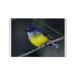 Yellow Robin Rectangle Magnet