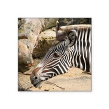 "Zebra003 Square Sticker 3"" x 3"""