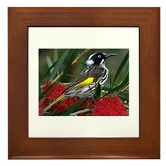 New Holland Honeyeater Framed Tile