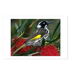 New Holland Honeyeater Postcards (Package of 8)