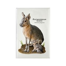 Patagonian Cavy Rectangle Magnet