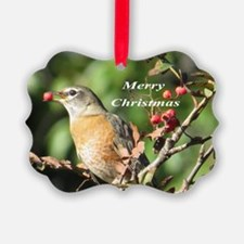 Robin Immature Ornament