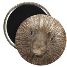 Quillan the Porcupine  Magnet