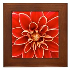 Red Dahlia Square 2 Framed Tile