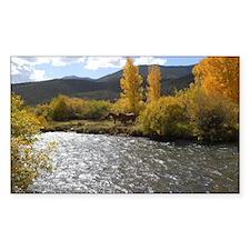 Colorado Beauties Decal