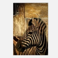 wild zebra safari Postcards (Package of 8)