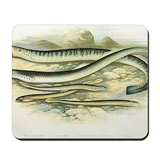 Vintage Marine Life, Lamprey Eels Mousepad