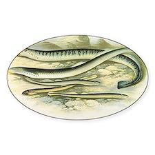 Vintage Marine Life, Lamprey Eels Decal