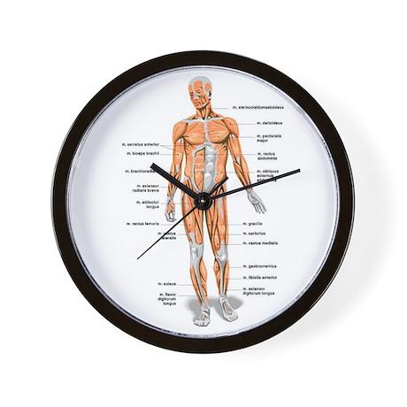 The Anatomy Wall Clock