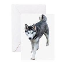 Husky Greeting Cards (Pk of 20)