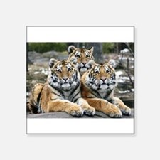 "TIGERS Square Sticker 3"" x 3"""