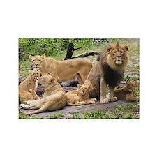LION FAMILY Rectangle Magnet
