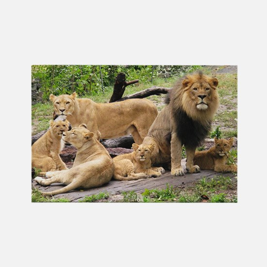 LION FAMILY Rectangle Magnet