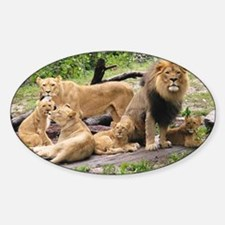 LION FAMILY Sticker (Oval)