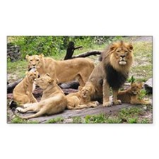 LION FAMILY Decal
