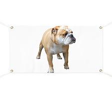 Cute English bulldog Banner