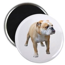 """Unique Bulldog 2.25"""" Magnet (100 pack)"""