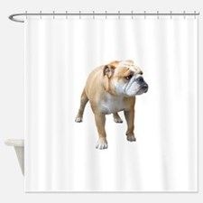 Cute American bulldog Shower Curtain