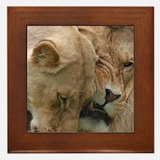 Nuzzling Lions Framed Tile
