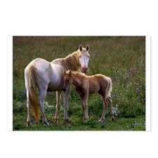 Mare and Foal Postcards (Package of 8)