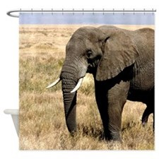 African Bush Elephant moving to success a Shower C