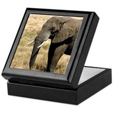 African Bush Elephant moving to success a Keepsake