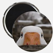 Peeking Goose Magnet