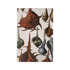 Vintage Seashells Rectangle Magnet