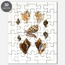 Vintage Seashells and Snail Puzzle