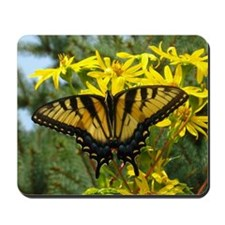Beautiful Eastern Tiger Swallowtail on Y Mousepad