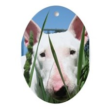 Cute English Bull Terrier Hiding in  Oval Ornament