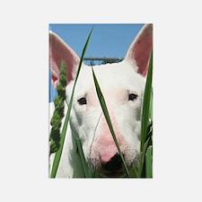 Cute English Bull Terrier Hiding Rectangle Magnet
