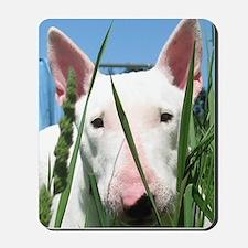 Cute English Bull Terrier Hiding in the  Mousepad