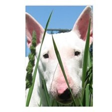 Cute English Bull Terrier Postcards (Package of 8)